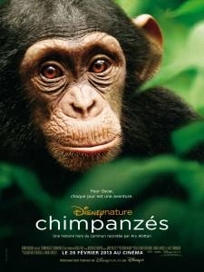 chimpanzes-225x300